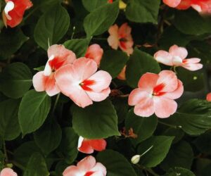 Top 10 Beautiful Shade-Loving Flowers