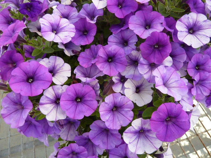 Top 10 Flowers That Will Make Your Garden a Purple Paradise