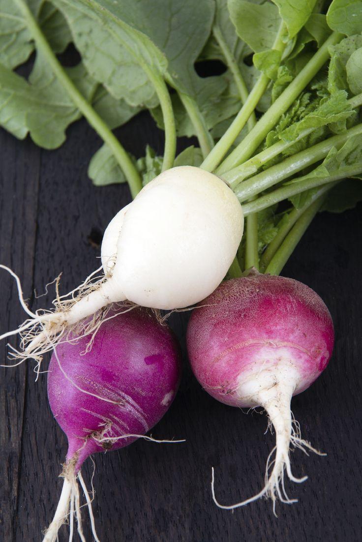 Top 10 Tips on How to Grow Radish
