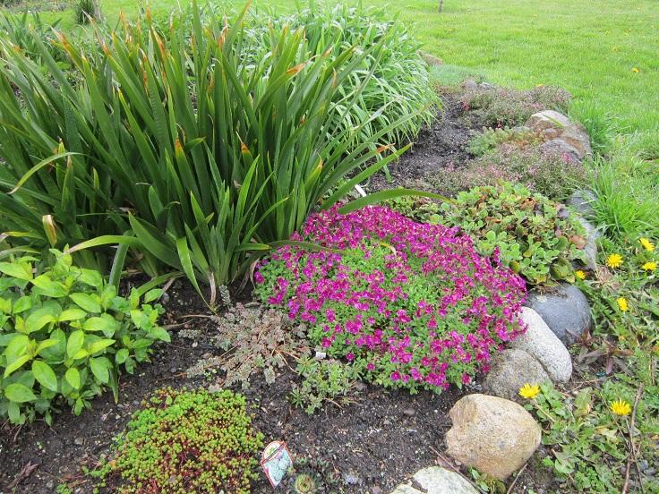Rock Cress. Top 10 Best Plants For A Rock Garden