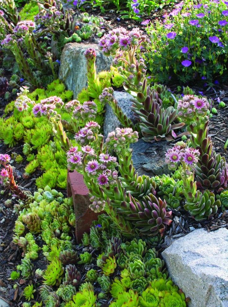 Top 10 Best Plants for a Rock Garden - Top Inspired on Rock Backyard  id=15396