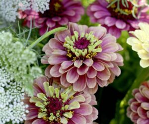 Top 10 Gorgeous Flowers to Use for Garden Beds
