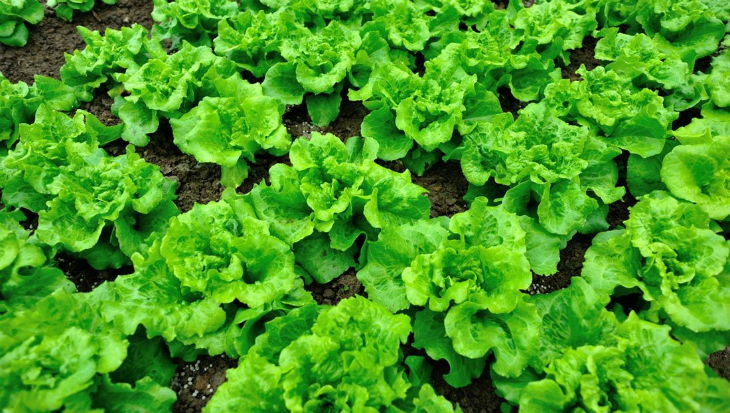 lettuce-lzf