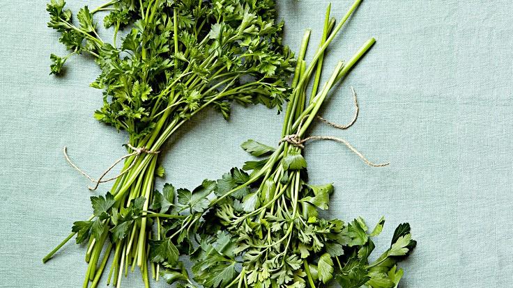 parsley-varieties