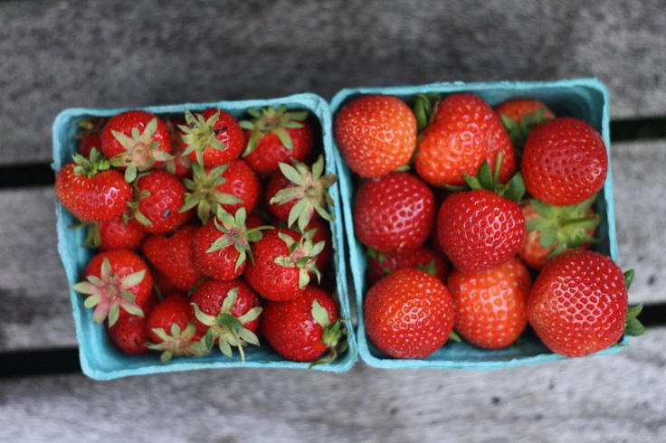 Top 10 Tips on Growing Strawberries in Your Garden