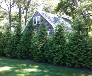 Top 10 Fastest Growing Shade Trees