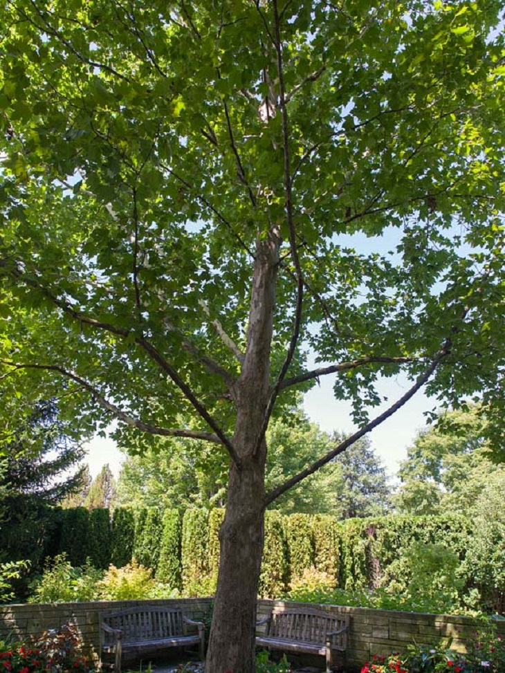 Top 10 Fastest Growing Shade Trees Page 2 Of 10 Top