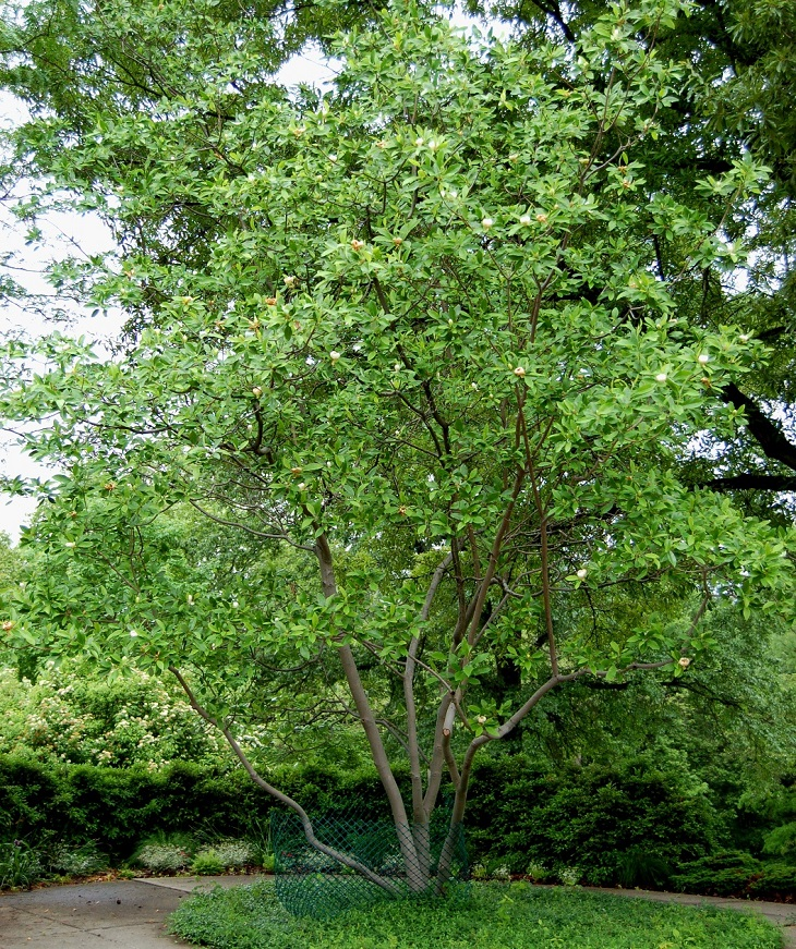 Top 10 Fastest Growing Shade Trees Page 6 Of 10 Top