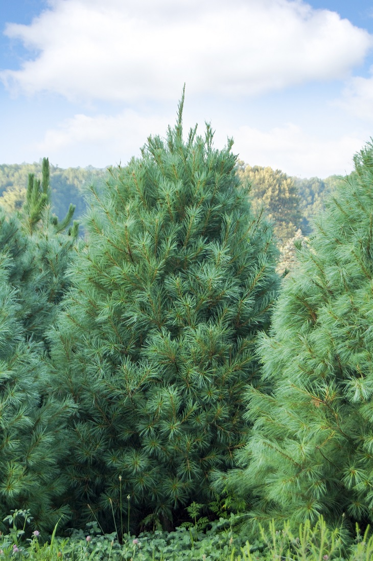 Soft Cat Food >> TOP 10 Fastest Growing Shade Trees - Page 8 of 10 - Top ...
