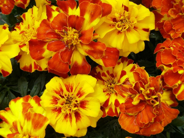 Top 10 Flowers To Grow In The Summer