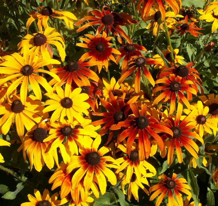 What Will I Look Like When I Grow Up >> Top 10 Flowers To Grow In The Summer - Top Inspired