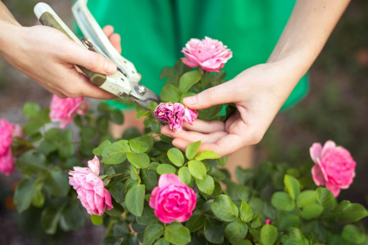 Top 10 Advices For Summer Gardening