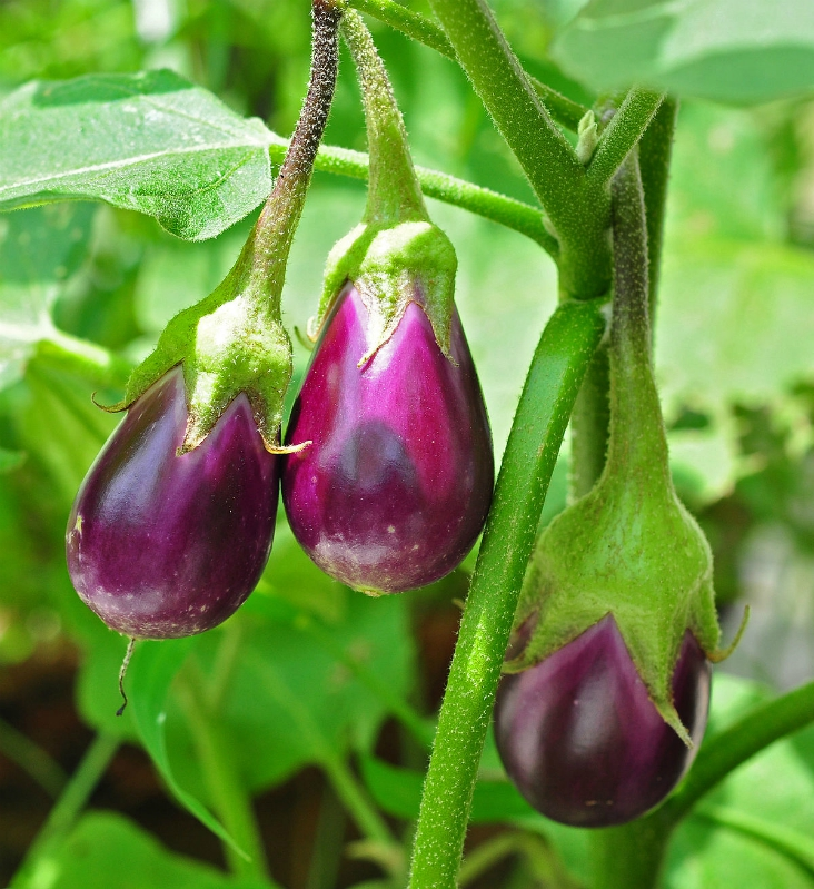 Top 10 Vegetables To Plant In Late Summer