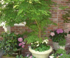 Top 10 Tips For Pot Planting