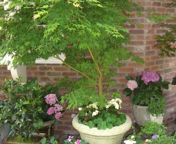 Top 10 tips for pot planting top inspired - Best compost for flower pots solutions within reach ...