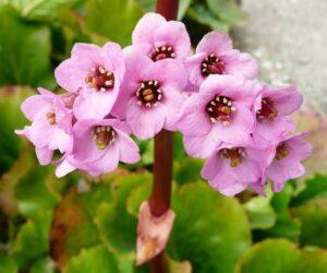 Top 10 Wonderful Flowers That Bloom All Year Long