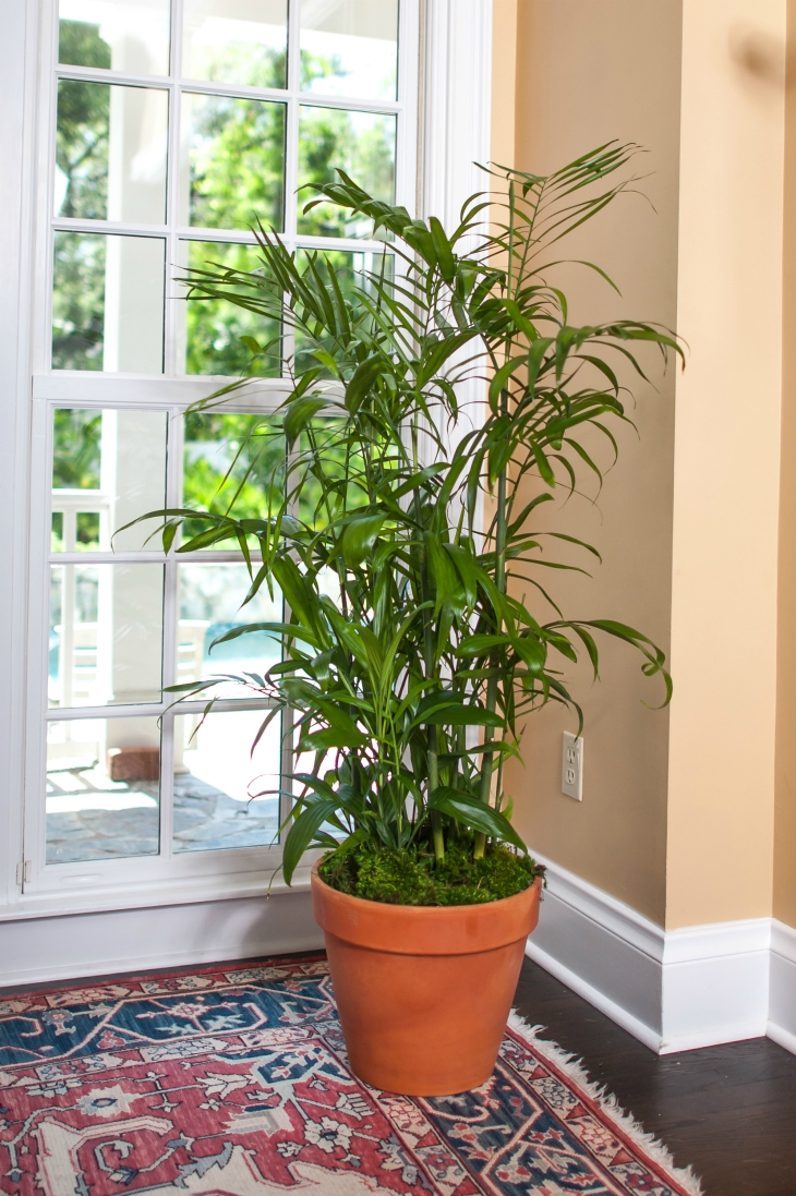 Top 10 easy to grow plants with great health benefits for Easy to grow houseplants
