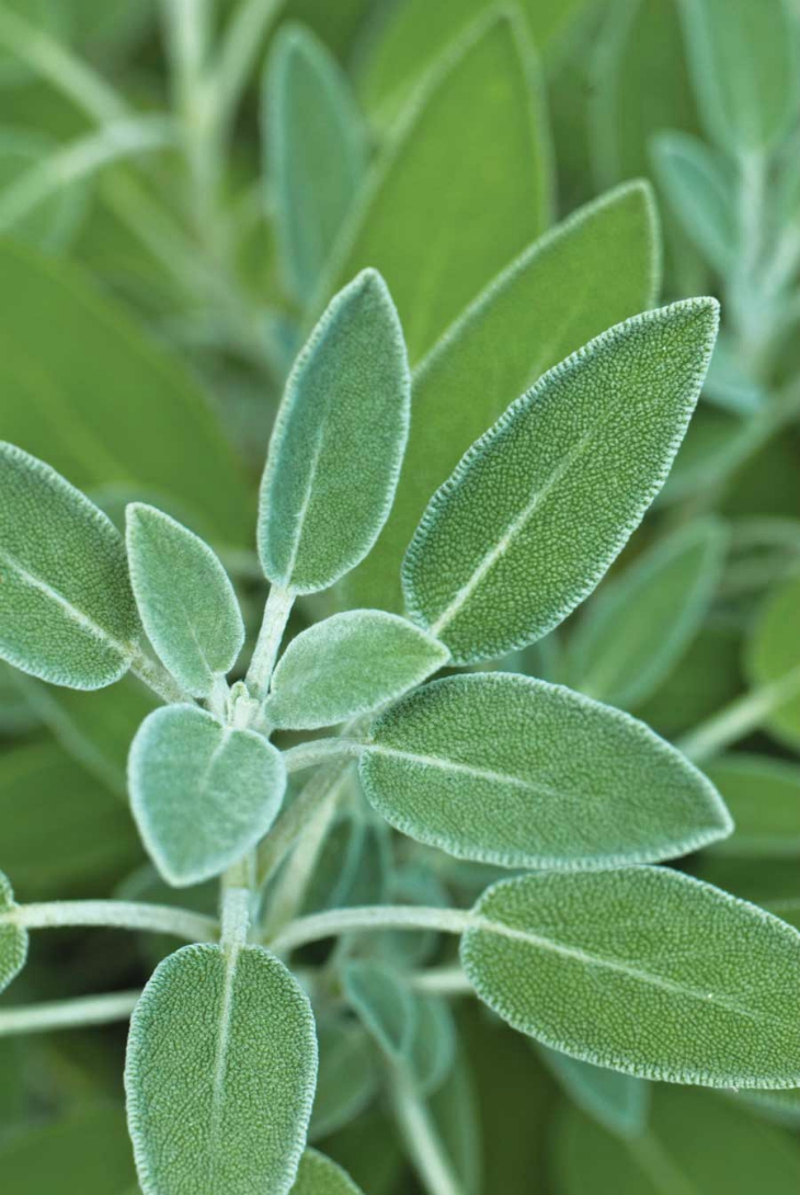 Top 10 Herbs With Medicinal Effect That You Can Grow In Your Home