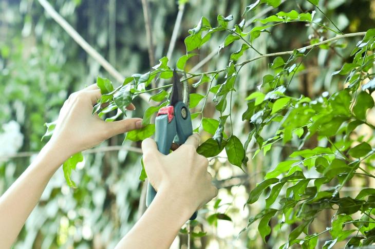 Top 10 Autumn Activities Connected To Your Garden