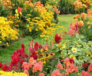 Top 10 Tips About Autumn planting