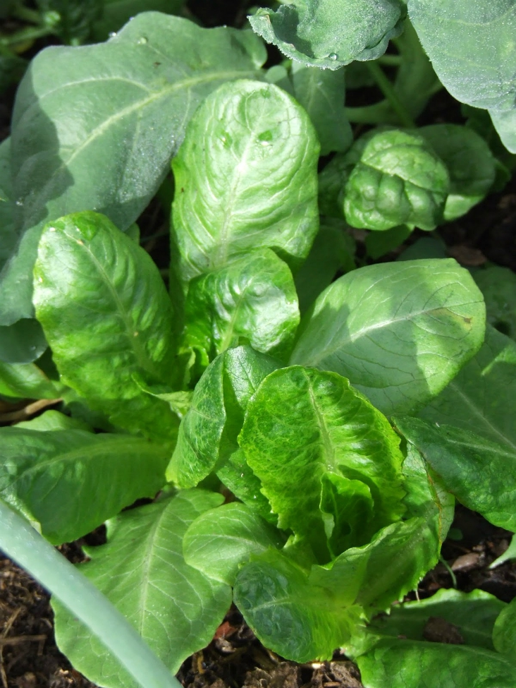 Top 10 Vegetables To Plant In Autumn