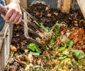 Top 10 Tips For Making Your Own Compost