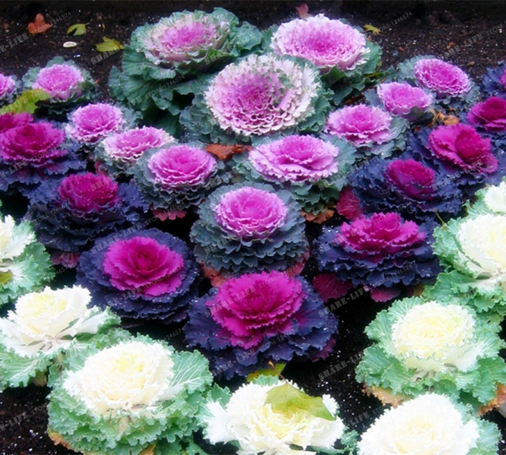 Top 10 Plants That Will Survive The Winter