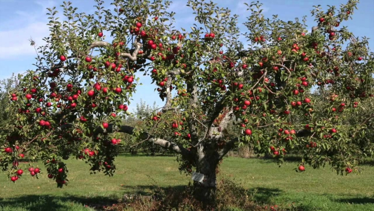 Top 10 tips for autumn fruit trees planting top inspired - Planting fruit trees in autumn ...
