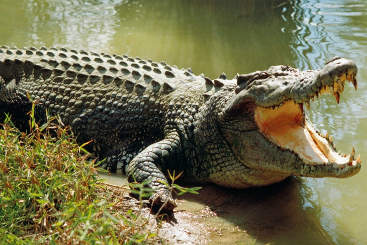 TOP 10 Most Dangerous Animals In The US