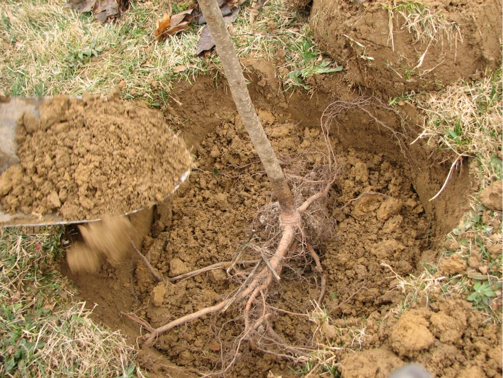 Top 10 Tips For Autumn Fruit Trees Planting