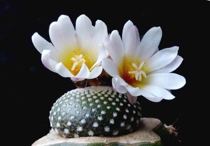 Top 10 Types of Cactus Plants