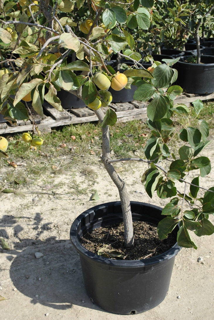Top 10 Tips For Autumn Fruit Trees Planting Top Inspired