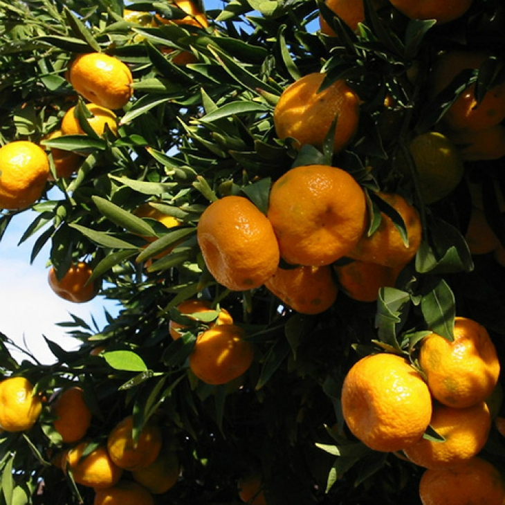 Top 10 Easy To Grow Fruit Trees