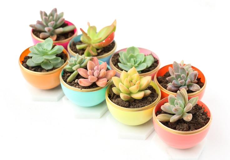 Mini-Spring-Succulent-Planters