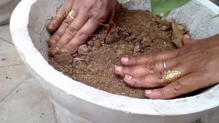 Top 10 Advices On How To Repot Your Plant