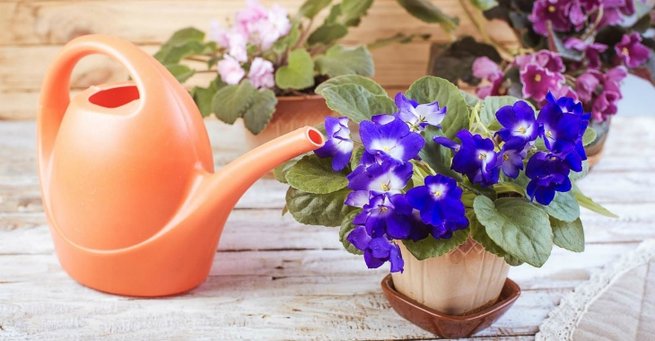 Top 10 Tips On How To Take Care For African Violets