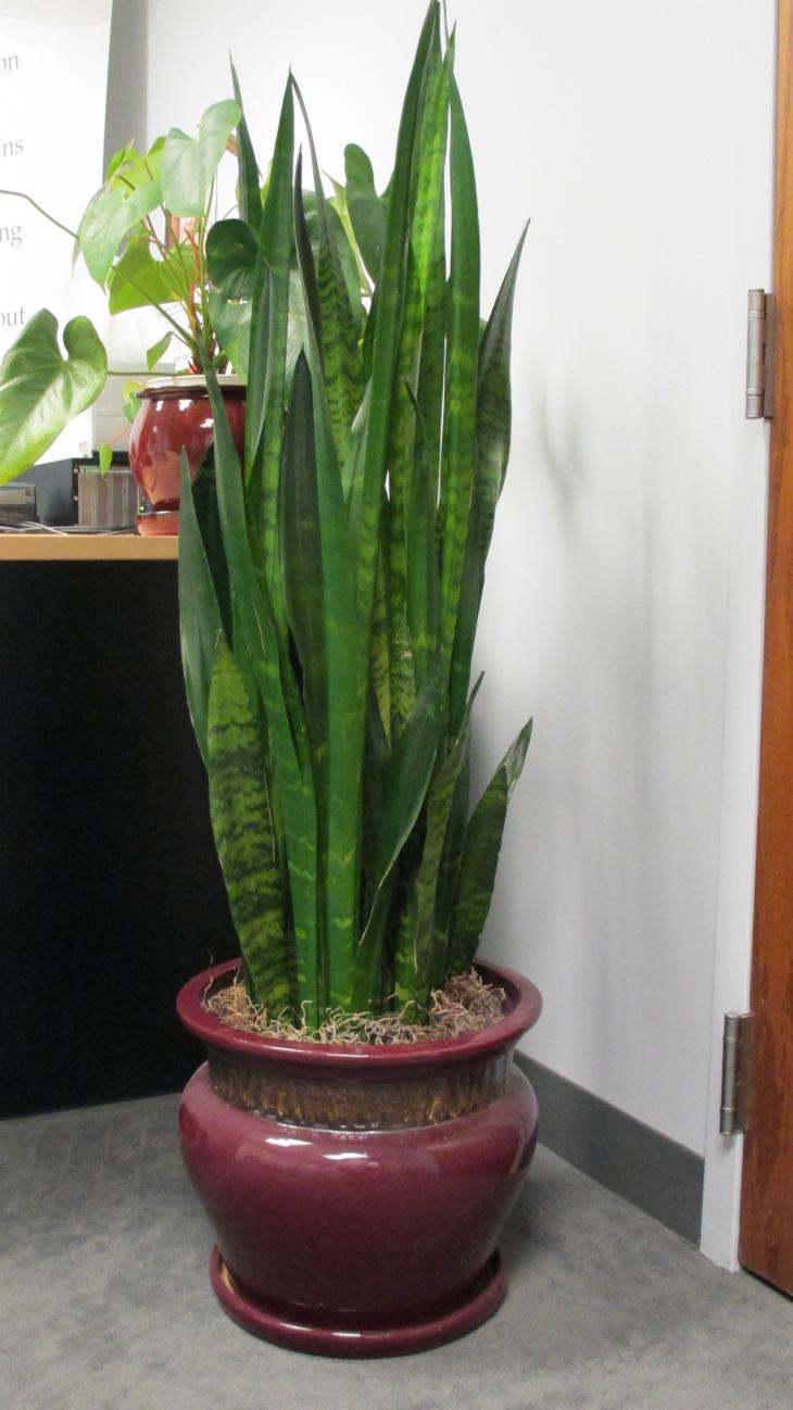 Top 10 Indoor Flowers That Thrive In Low Light