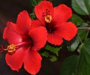 Top 10 Blooming Flowers For The Winter