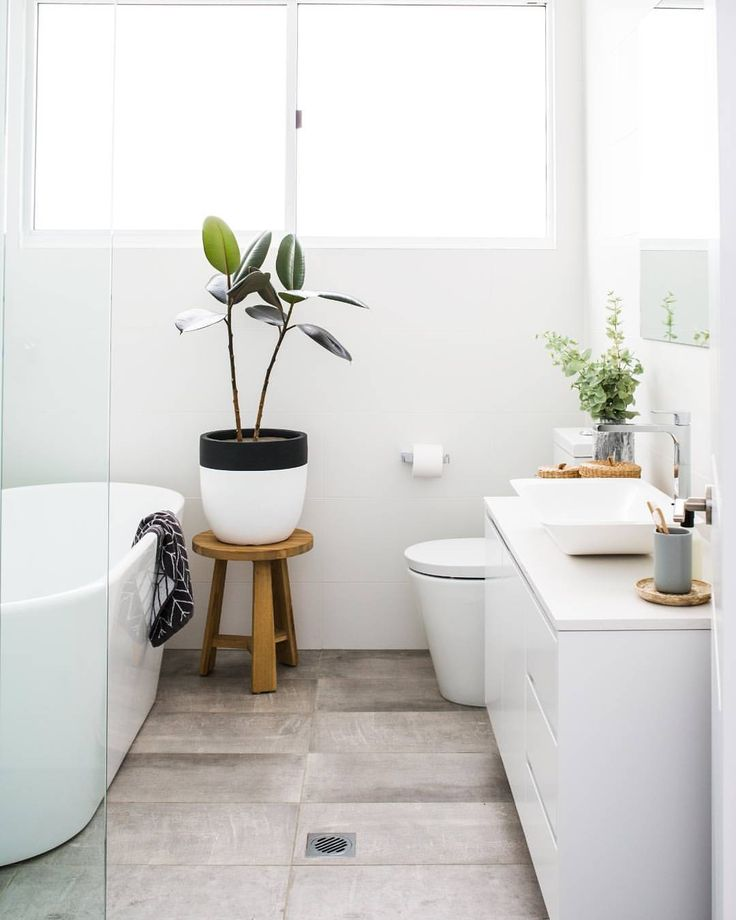 Bathroom-Plant