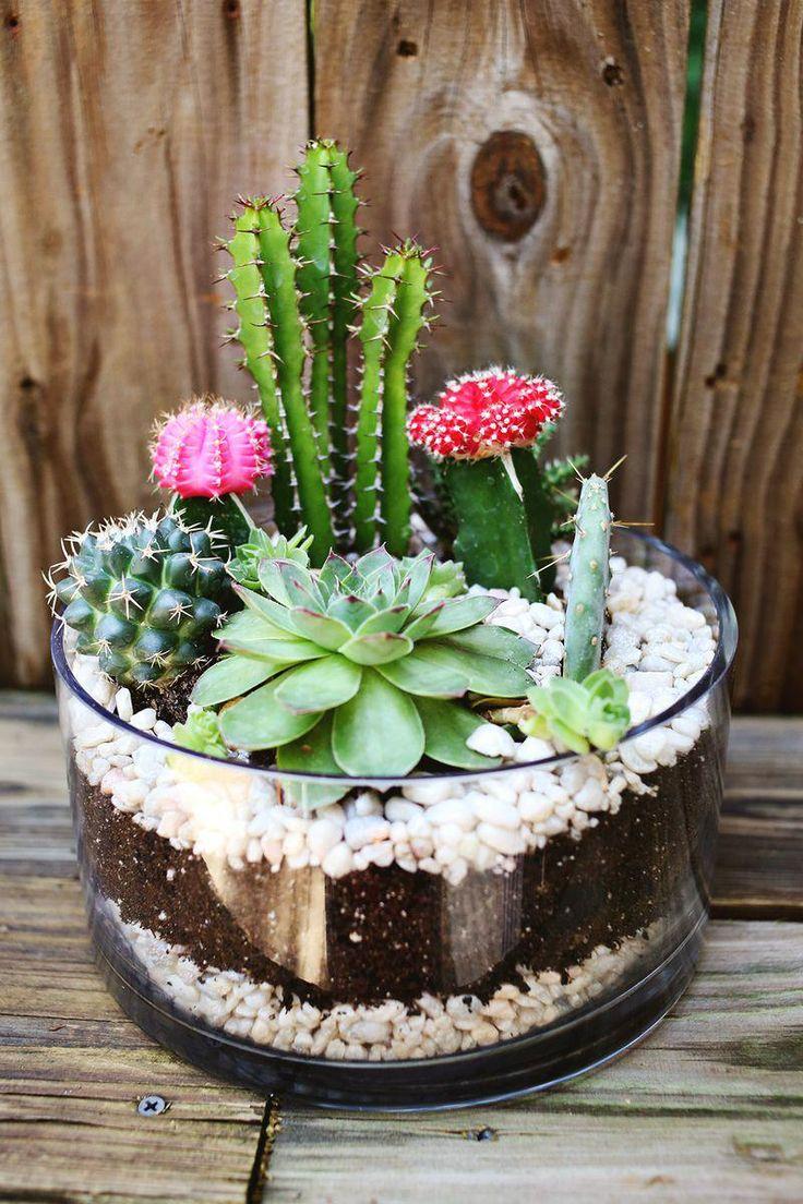 Cacti-Garden