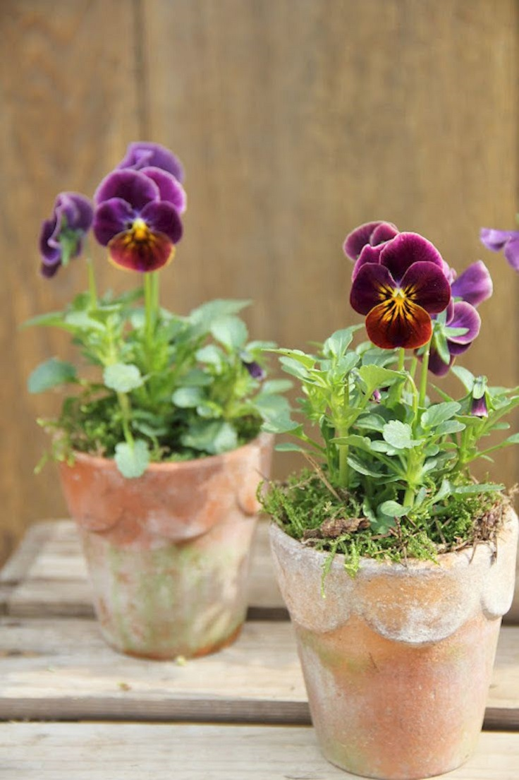 Top 10 Pretty Flowers to Welcome Spring in Your Garden