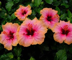 Top 10 Beautiful Flowers That Will Transform Your Garden