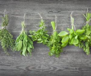 Top 10 Best Oregano Substitute Ingredients