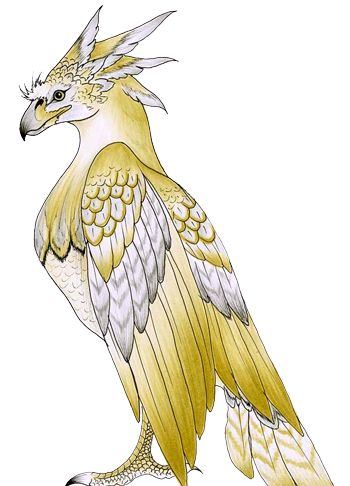 birds9