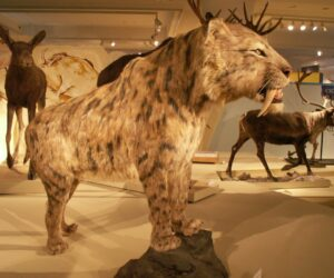 Top 10 Prehistoric Cats Evolving Into Our Feline Family