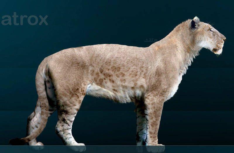 american-lion
