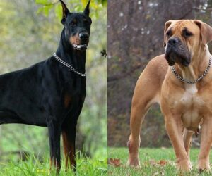 Top 10 Badass Dogs That Look Scarier Than Pitbull