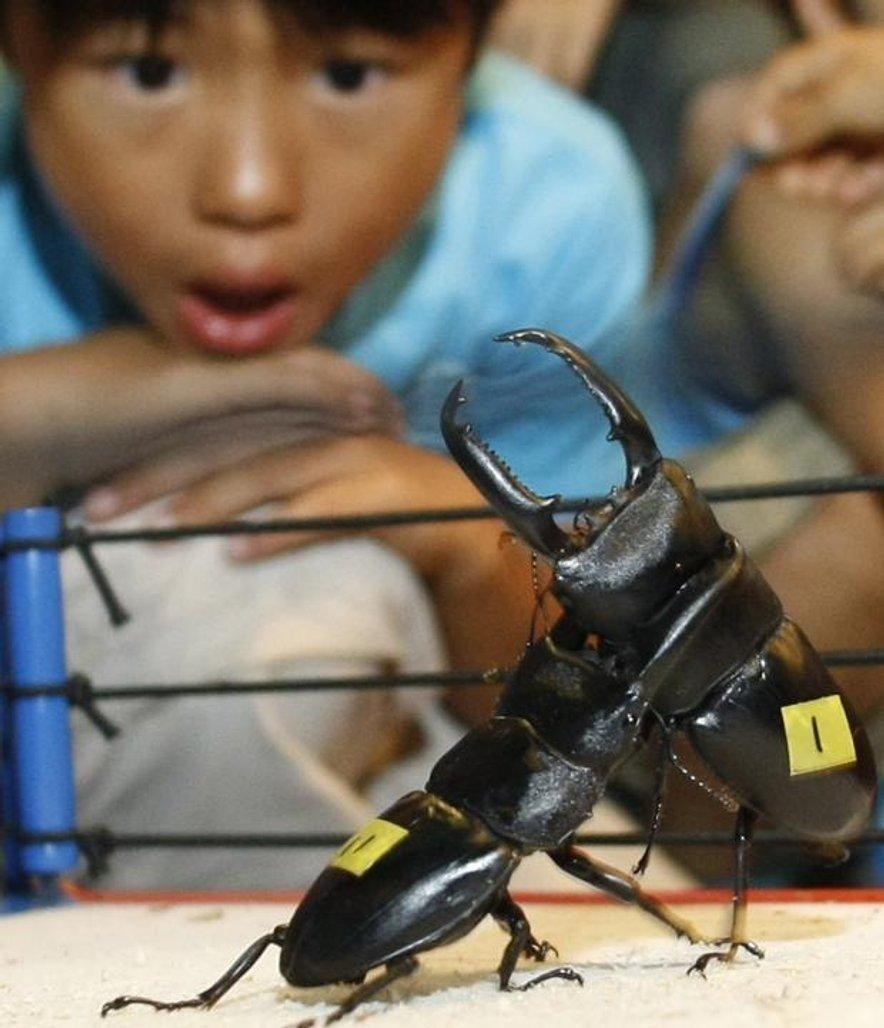 beetle-fighting