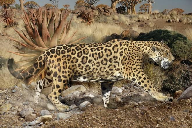 european-jaguar