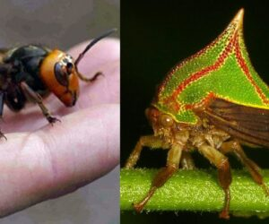 Top 10 Scary Insects That Will Make You Crap Your Pants